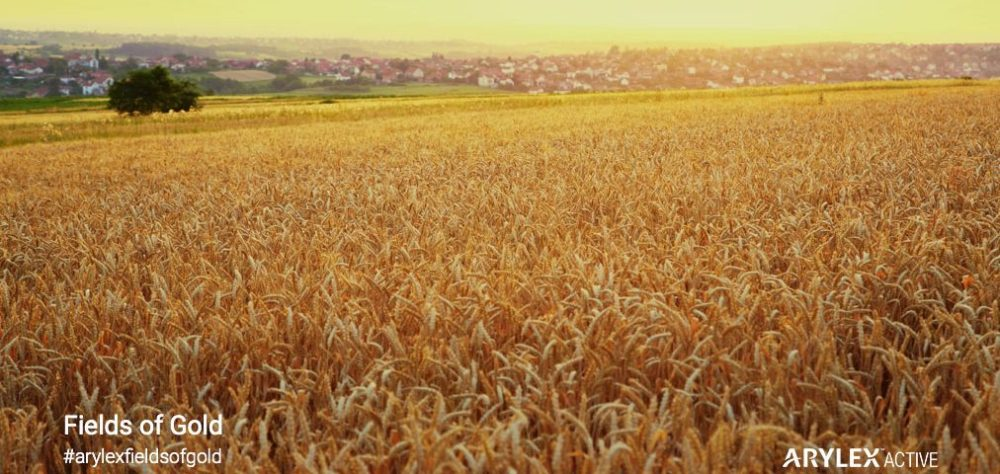 fields-of-gold-europe-1012x480